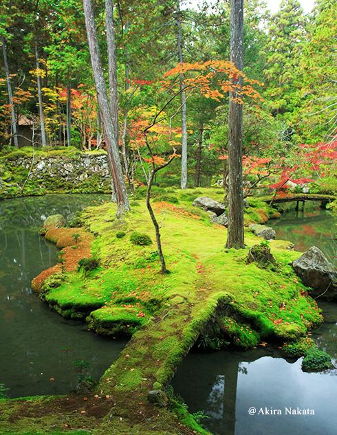 西芳寺 黄金池